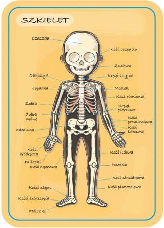 Układanka magnetyczna Ciało człowieka | Janod